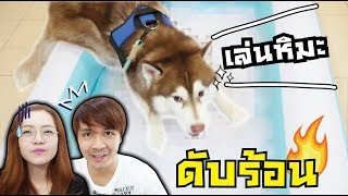 เล่นหิมะ กับ หมาสติแตก ดับร้อน!!! // ทำไมอากาศมันถึงร้อนขนาดนี้~~