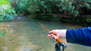 Dry Fly Fishing For Brown Trout! (Creek Fishing)