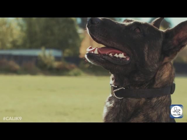 Cali-k9-bay-area-dog