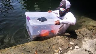 Plastic Bin Fish Trap Catches BIG FISH! DIY   Monster Mike Fishing