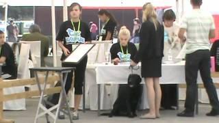 preview picture of video 'Izložba pasa CAC Karlovac 2012'