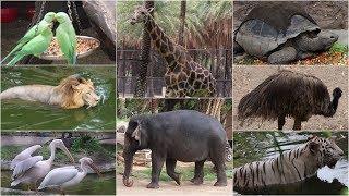 NEHRU ZOO HYDERABAD - HD Video - FULL Coverage || nehru zoological park