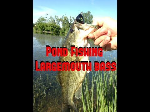 How To Find Bass On Hot Summer Days – Pond Largemouth Fishing 7/11/13