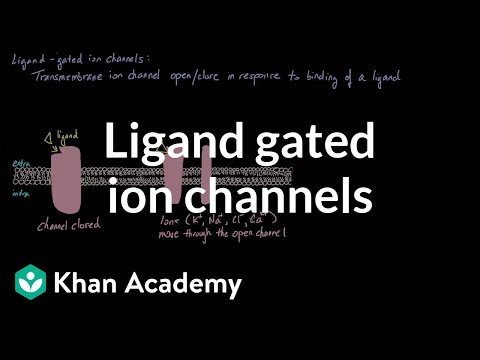 Ligand Gated Ion Channels (video)   Khan Academy
