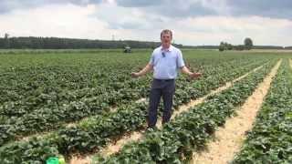 Demo Farmy wspierające Grupę Truskawkową przypominamy sezon 2015