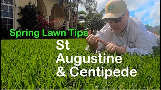 2020 Spring Lawn Tips: WARM SEASON // St Augustine, Centipede - 2020 RUNNING of the STOLONS