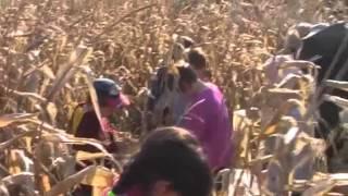 Kukorica Projekt