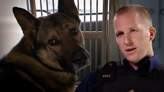 Send In The Dogs - Season 2, Episode 4
