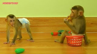 Cute Baby Luna Sitting In Basket And Play Toy With Tiny Nina
