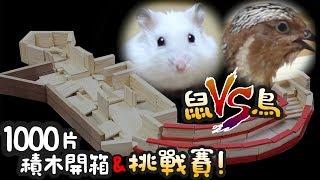 《倉鼠人》鼠V.S鳥!1000片積木開箱 !2種賽道挑戰對決!