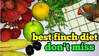 Finch diet- what do finches eat  ( in Hindi and English)