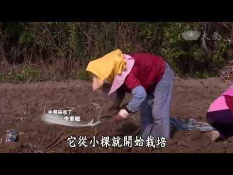 台南老大的牛蒡田(大愛電視台)