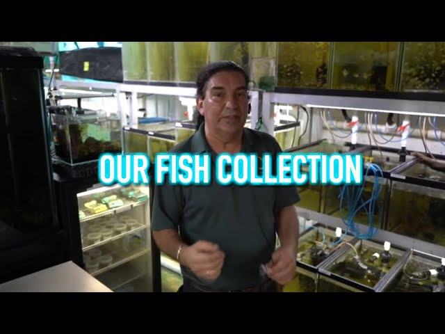 Not Only Discus   Our Other Collection of Fish!