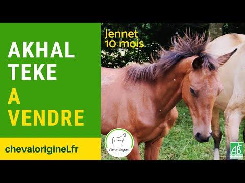 """Jennet, ma toute jeune gazelle"""" des steppes turkmènes !"""