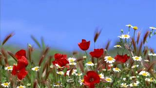 Beady Eye-Wind Up Dream