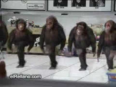 irish monkey dance(stephens version)