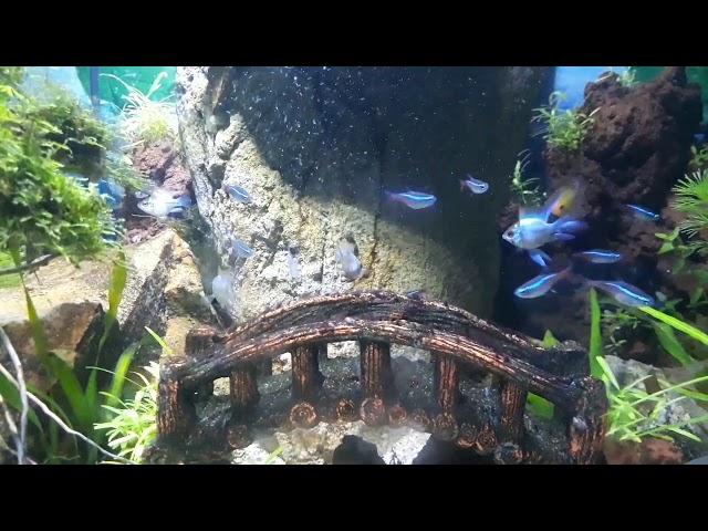 Aquascape cumi2 go