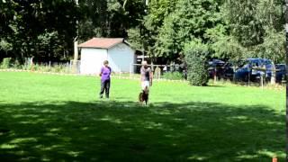 preview picture of video 'Obedience Turnier Klasse 1 Birgit 30 08 14'