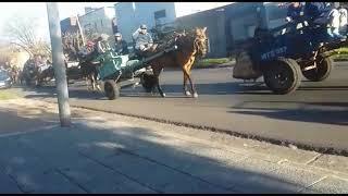 La Justicia falló a favor de los caballos de Quilmes y ya rigen los efectos de una medida cautelar p