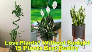 Love Plants But No Sunlight ? These Plants can Be Your Best Buddy