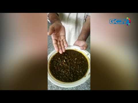 """""""Worms crawling over lentils"""": Inmates at COVID-19 hospital in Bandipora treated like 'untouchables'"""