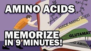 Memorize the 20 Amino Acids in 9 Minutes