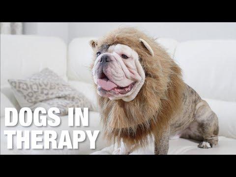 Psi u terapeuta