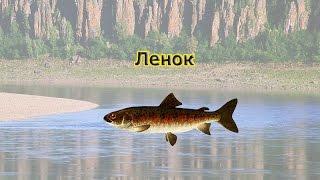Что дает карма в рыбалке 3