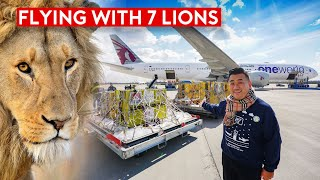 Special Rescue Flight – Flying With 7 Lions on Qatar Airways B777