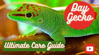 Giant Day Gecko: Ultimate Care Guide (2020)