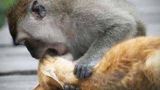 Смотреть онлайн Подборка: Коты против обезьян