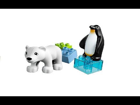 Vidéo LEGO Duplo 10501 : Les animaux polaires du zoo