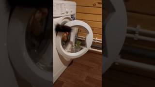 Когда у банды кошек что-то пошло не так
