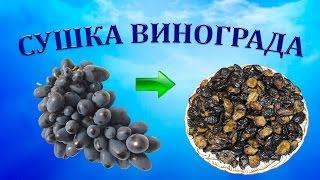 Как приготовить изюм из винограда Молдова?