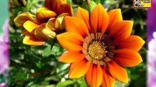 Piyaa Bin Baaheen Aawat - Devdas - K L SAIGAL - YouTube