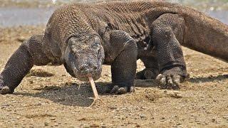 72 самых опасных животных Австралии часть1