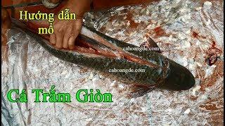 Hướng dẫn mổ cá trắm giòn, lọc cá trắm giòn, phi lê cá trắm giòn | Cá Hoàng Đế