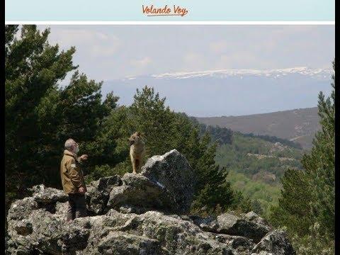 VOLANDO VOY: Villardeciervos y millar de Lobos. Centro del Lobo de CyL