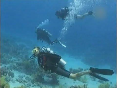 Необычные обитатели Тихого океана. Красивое, расслабляющее видео для медитации.