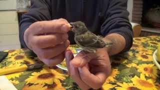 L'uccellino Caduto Dal Nido - 5°giorno