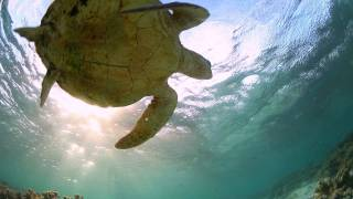 Great Barrier Reef Travel Video Guide, Queensland Australia