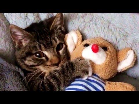 Diese Katze kann nicht ohne ihr geliebtes Kuscheltier einschlafen