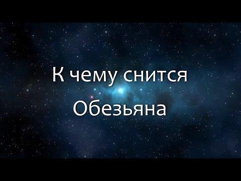К чему снится Обезьяна (Сонник, Толкование снов)