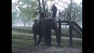 preview picture of video 'Manas - Elephant  Ride'