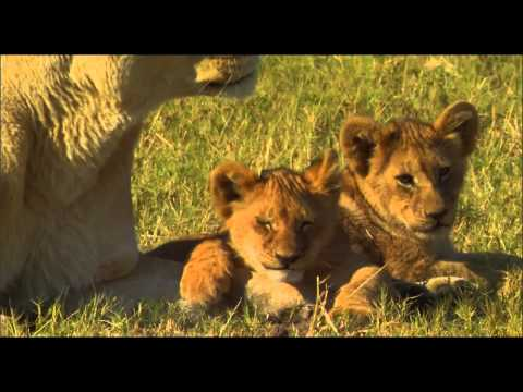 The Last Lions Movie Trailer