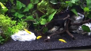 初めての淡水熱帯魚飼育コリドラス水槽立ち上げましたその2