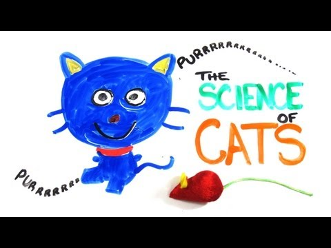 The Science Of Why Cats Do The Things Cats Do