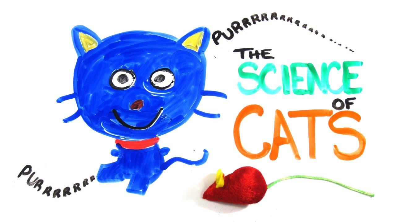 Thank Giz It's Friday: Avoiding Cat-astrophe