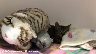Feral mama Montana reunites with her kittens - Part 1