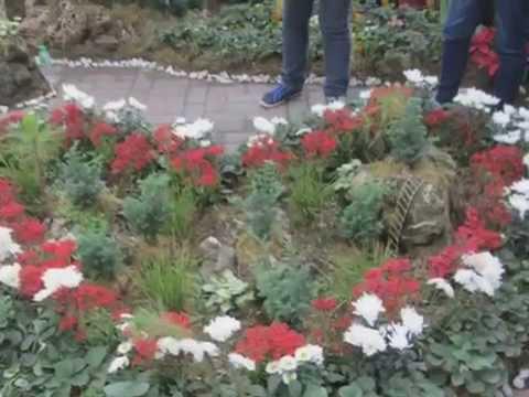 Pagtatasa para giardia sa Khabarovsk kung saan gagawin